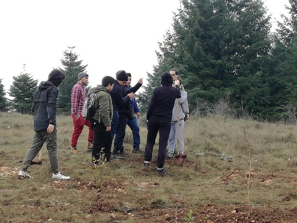 Nuovi alberi sul Salviano, a lavoro i ragazzi del Serpieri