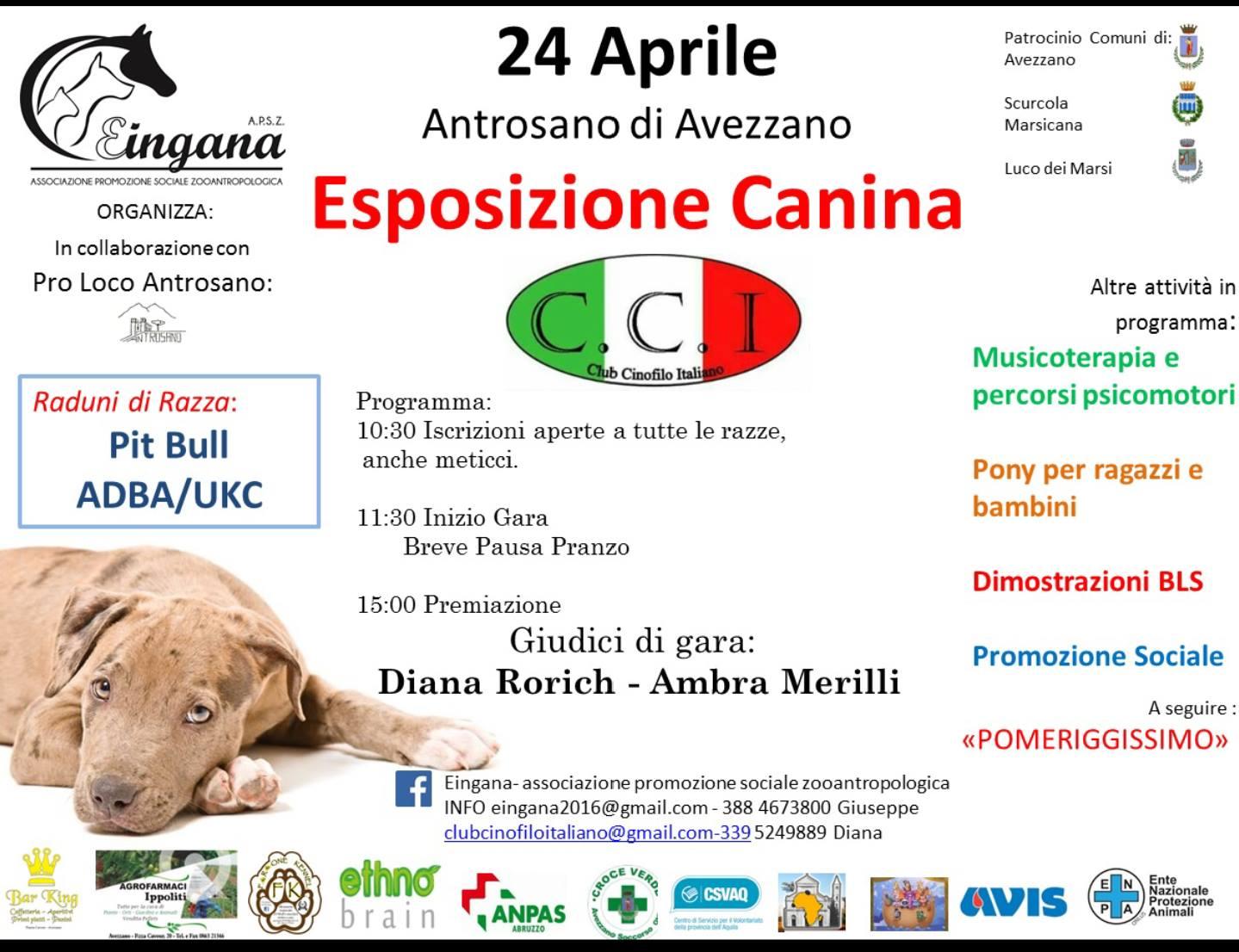 Esposizione canina ad Antrosano