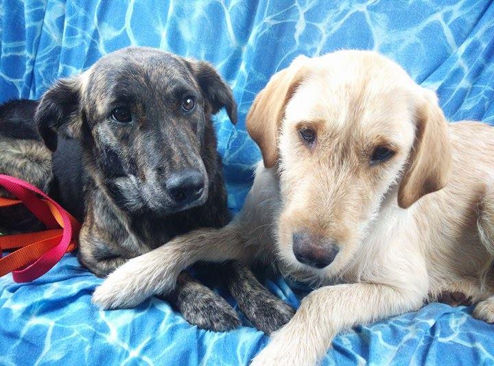 Smarrite due cagnoline ad Avezzano