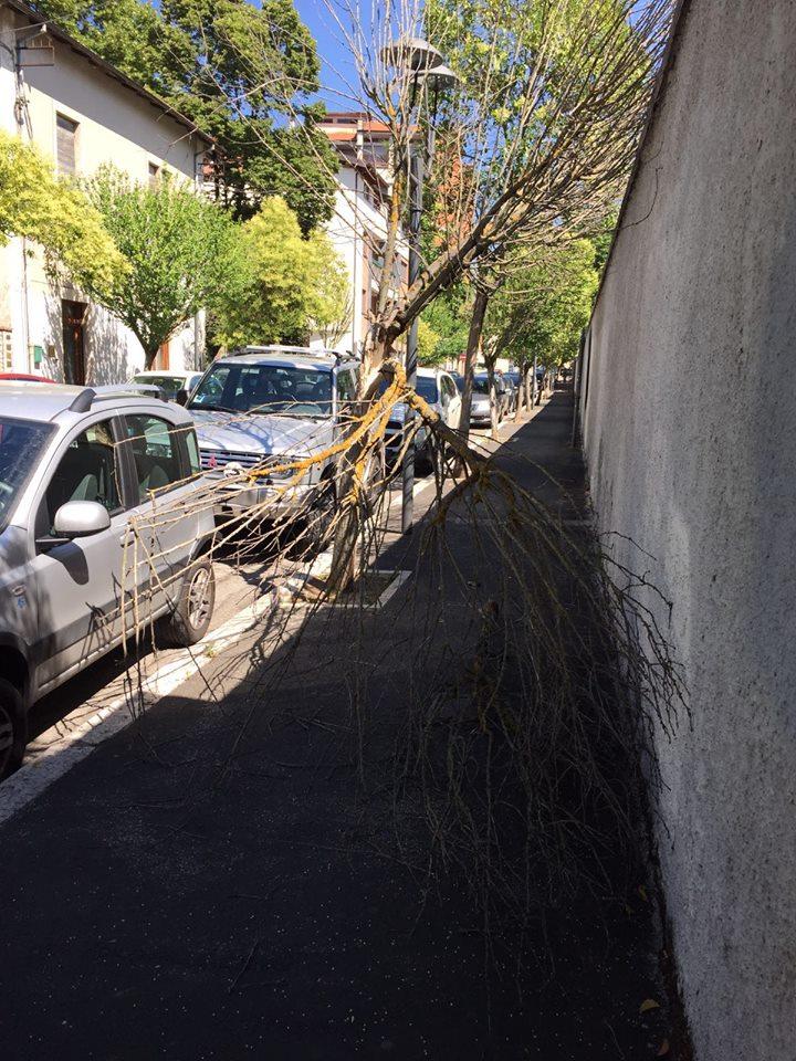 Alberi che cadono sulle panchine e sui marciapiedi. Se ne spezza un altro in via Trieste