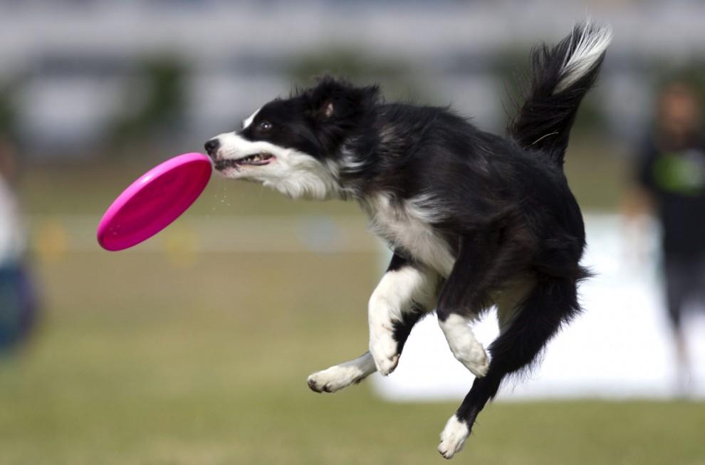 Corso di 'Disc Dog' ad Avezzano