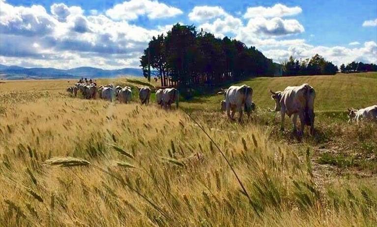 Coldiretti, transumanza patrimonio Unesco per salvare i pastori