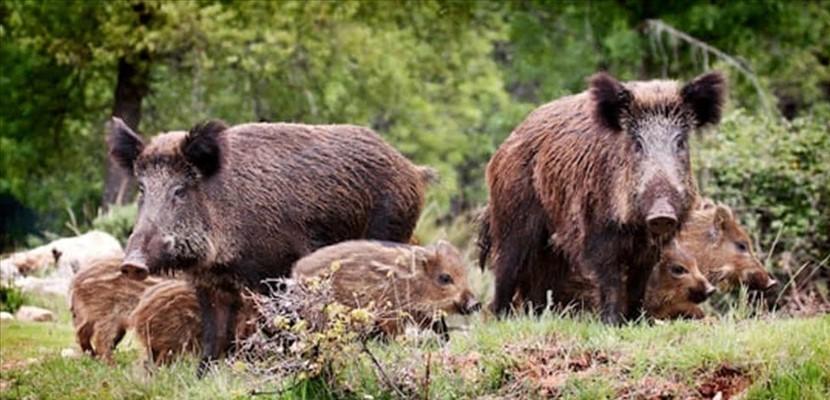 """Danni da fauna selvatica, Berardinetti """"Ok dalla Commissione europea al rimborso del 100 per cento, ora subito l'erogazione dei fondi"""""""