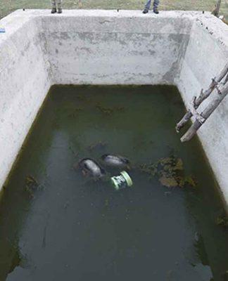 Il vascone che ha già ucciso 5 orsi in 8 anni continua ad essere una trappola mortale per bestie ed esseri umani!