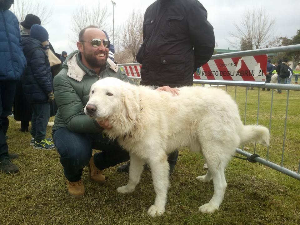 Cani abruzzesi da pecora, a Trasacco un convegno per spiegare tutto sulla legge che li ha fatti patrimonio regionale