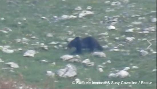 Lecce nei Marsi: incontro con l'orso   VIDEO