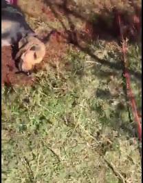 Cane squarciato metà: il ritrovamento dei cacciatori | VIDEO