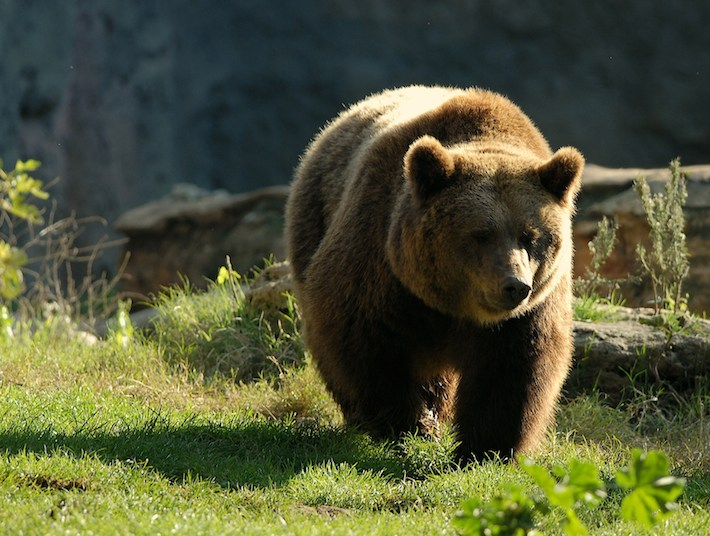 L'Abruzzo e l'orso nei tempi andati