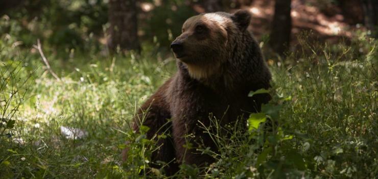 """""""Se togli la frutta, aiuti l'Orso"""".In azione i volontari del WWF e dell'Associazione """"Salviamo l'Orso"""""""