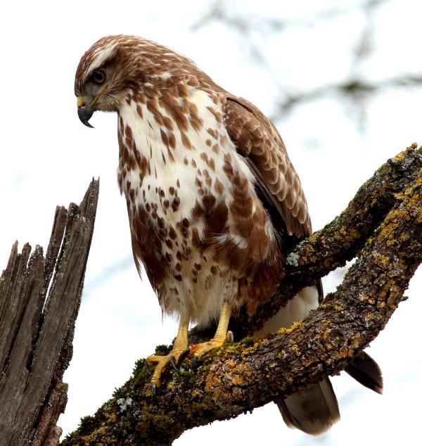 Incontri di Ornitologia, 'Guida al monitoraggio'