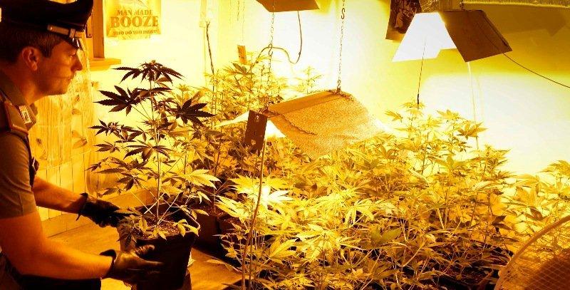 Coltiva marijuana in casa: arrestato marsicano