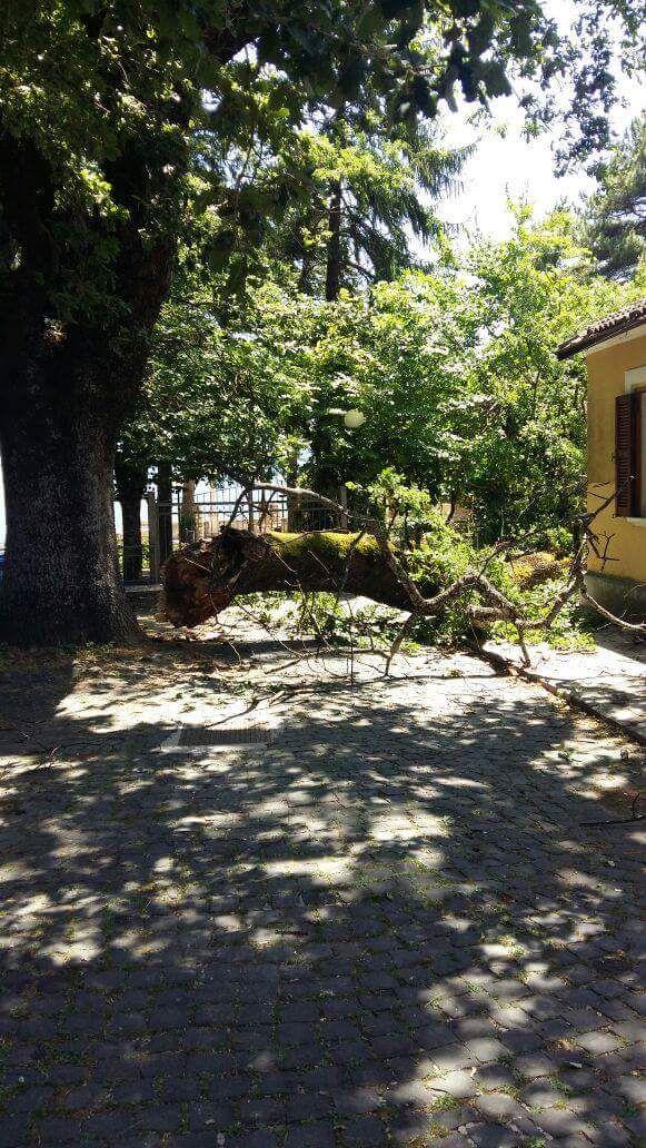 Si stacca un enorme ramo da una quercia secolare, tragedia sfiorata a Civita d'Antino