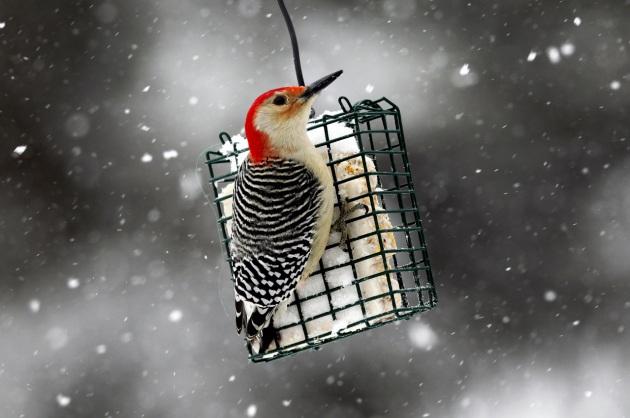 È arrivata la neve ed è il momento giusto per dare una mano agli uccellini