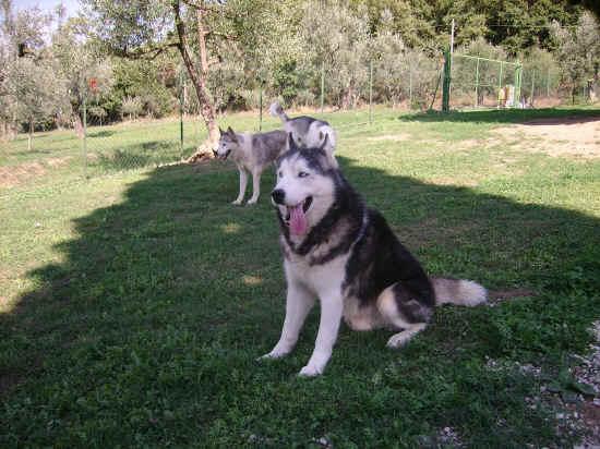 Allevamento cani, in Abruzzo manca una legge. Bracco (sinistra italiana) interviene sulla cinotecnica