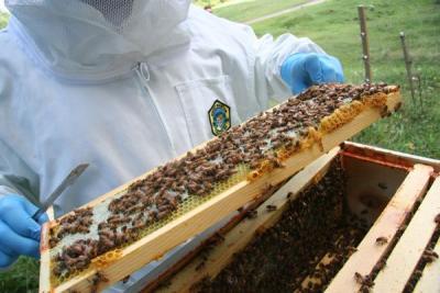 A Pescina appuntamento di formazione per gli apicoltori