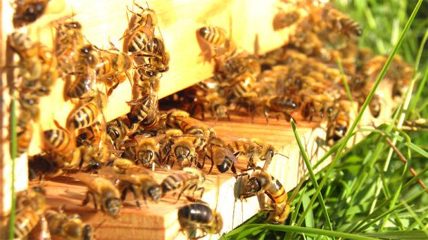 Avezzano: ultimi posti disponibili per il secondo corso base di apicoltura