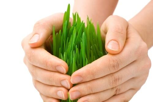 Contributi per le assicurazioni agricole, 300 milioni di euro sono destinati a questa misura
