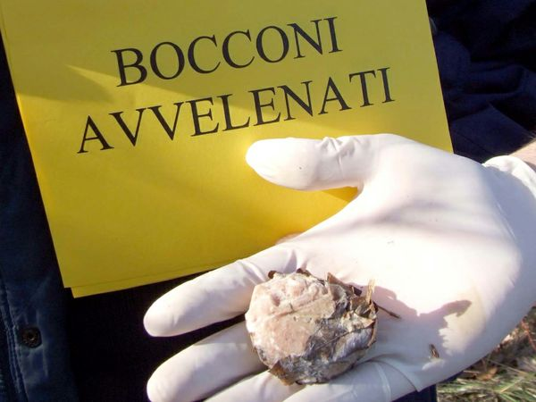 Esche avvelenate: Berardinetti presenta proposta di legge