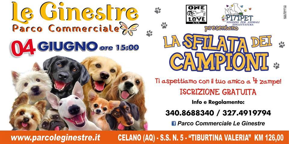 """Appuntamento a Celano con """"La sfilata dei campioni"""", domani l'evento dedicato ai cani più belli"""