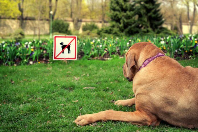 Verrecchia su Piazza Torlonia, si revochi il divieto ai cani e si mettano più controlli