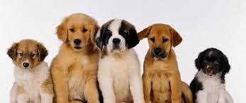 Registrazioni cucciolate, microchip e pedigree. Nella sede di Progetto Casciere riceve la delegazione dell'Enci