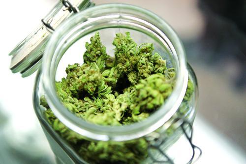 Cannabis medica: dall'Abruzzo storie di difficile accesso al farmaco