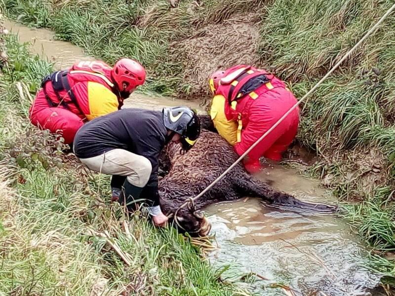Precipita in un torrente: cavallo salvato dai Vigili del Fuoco
