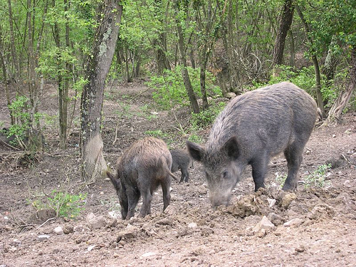 Danni fauna selvatica, notificati gli atti alla Commissione Europea