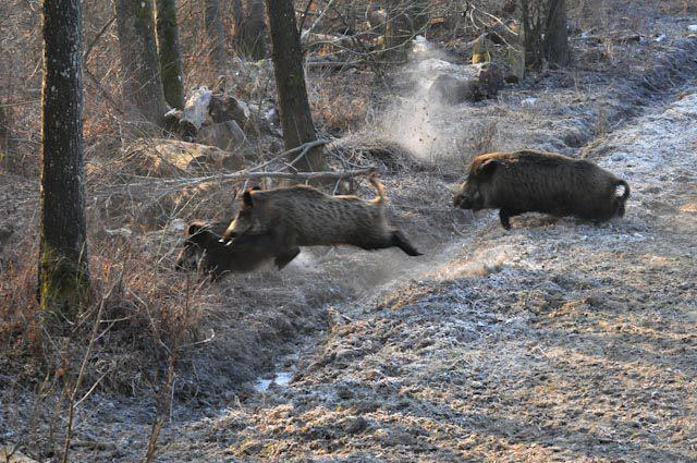"""Danni da fauna selvatica, Berardinetti: """"100% rimborsi ad agricoltori e imprese zootecniche del Parco Velino-Sirente"""""""