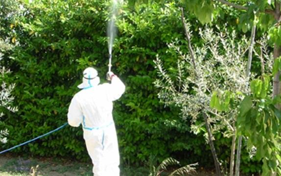 Disinfestazione degli alberi del centro di Avezzano