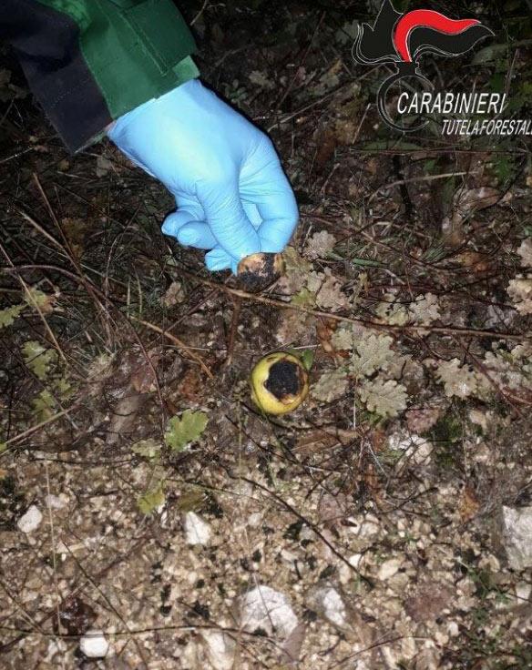 Esche avvelenate individuate dai Carabinieri Forestali con l'ausilio di cani antiveleno