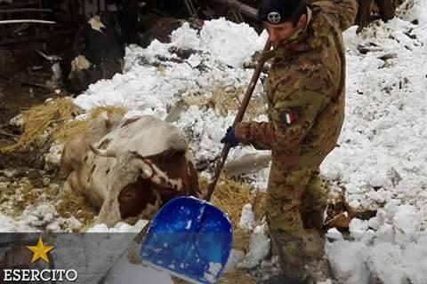 """Emergenza neve Pescina, morte decine di capi di bestiame. Il vicesindaco: """"Non lasciate soli gli allevatori"""""""