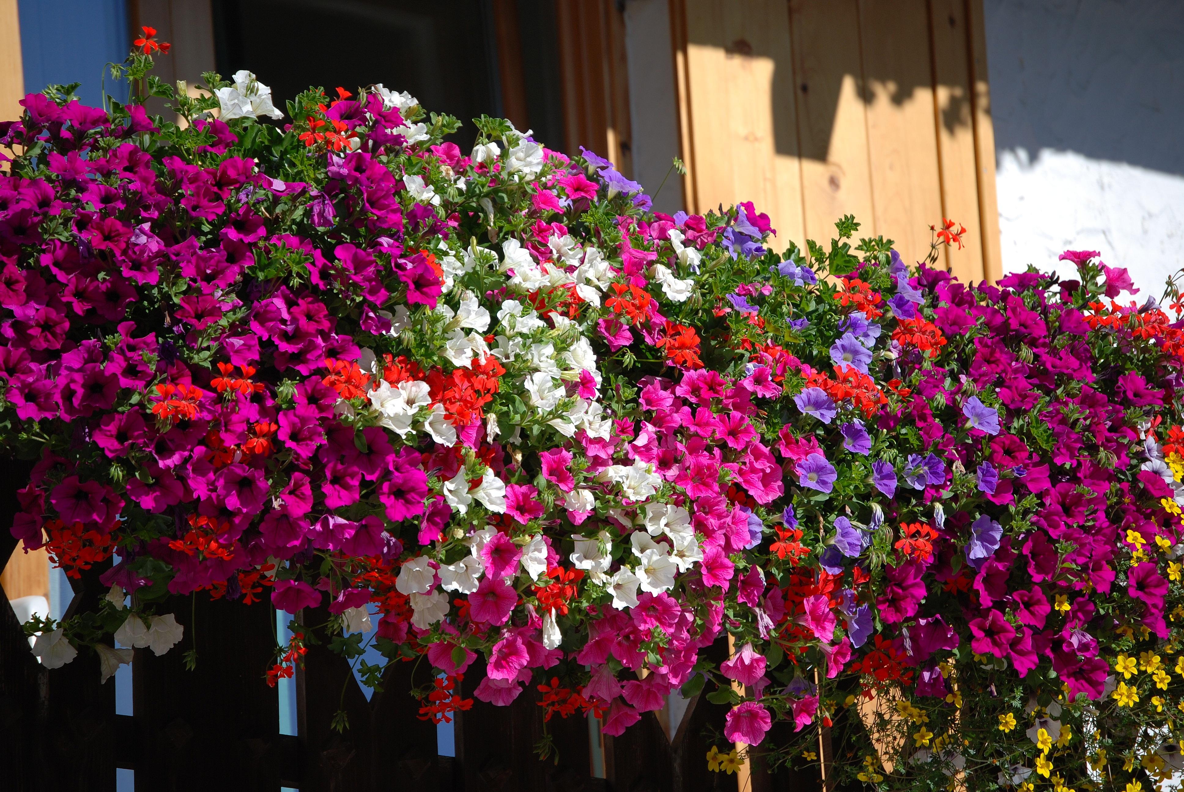 """Il borgo di Sante Marie diventa una giardino colorato con il concorso """"Balconi & Angoli fioriti"""""""