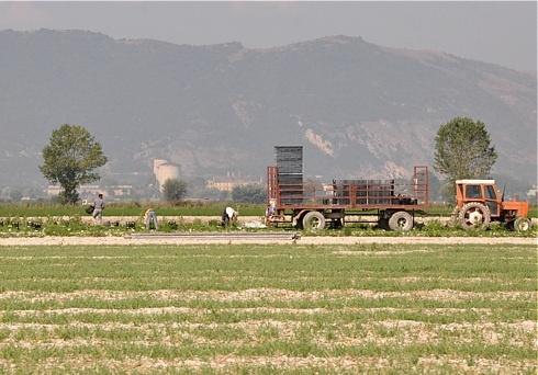 """Confagricoltura: """"Al Consorzio di Bonifica del Fucino inutili commissioni a spese degli agricoltori contribuenti"""""""
