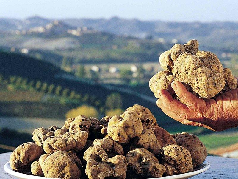 Abruzzo, tartufo bianco a 350 euro l'etto