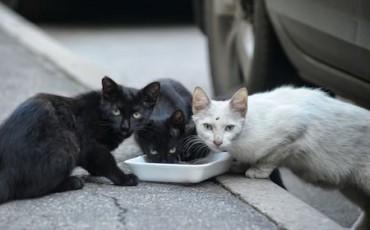 Il Sindaco di Cocullo ritirerà l'ordinanza che vieta di dare da mangiare ai gatti randagi nel centro storico