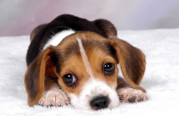 """""""Il Cane Buon Cittadino"""", parte il primo corso rivolto a conduttori di cani"""