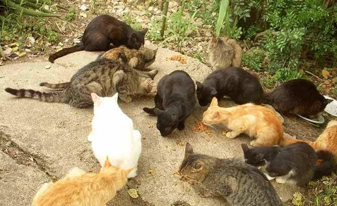 """Cocullo, multe a chi sfama i gatti randagi. Gli Animalisti Italiani """"è illegale"""""""