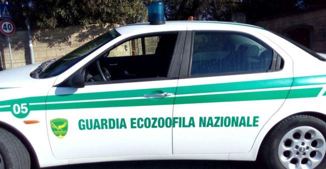 Guardia EcoZoofila Nazionale: si cercano volontari
