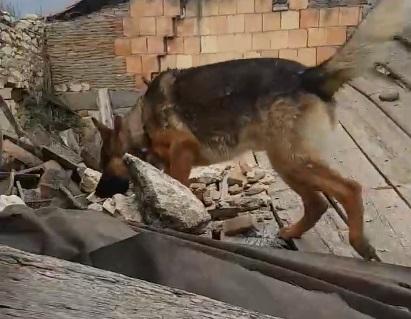 Kaos il cane eroe del terremoto di Amatrice è stato avvelenato