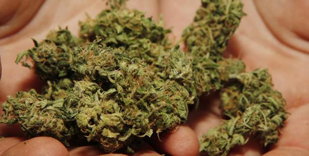 La polizia lo trovò con 13 chili di marijuana. Patteggia un anno e 4 mesi di reclusione