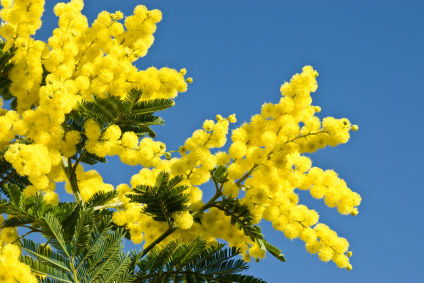 8 Marzo, San Benedetto dei Marsi aderisce alla Carta delle donne del mondo
