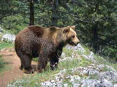 Tavolo interistituzionale per il monitoraggio dell'Orso Marsicano nella Riserva del Monte Salviano