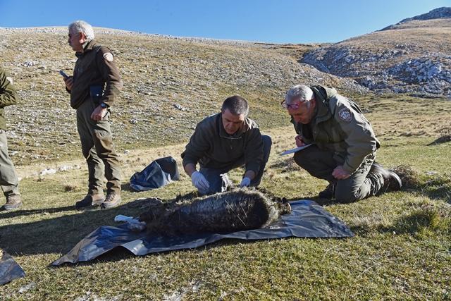 Morte dei tre orsi, ENDAS è pronta a mettersi in campo, occorre agire subito