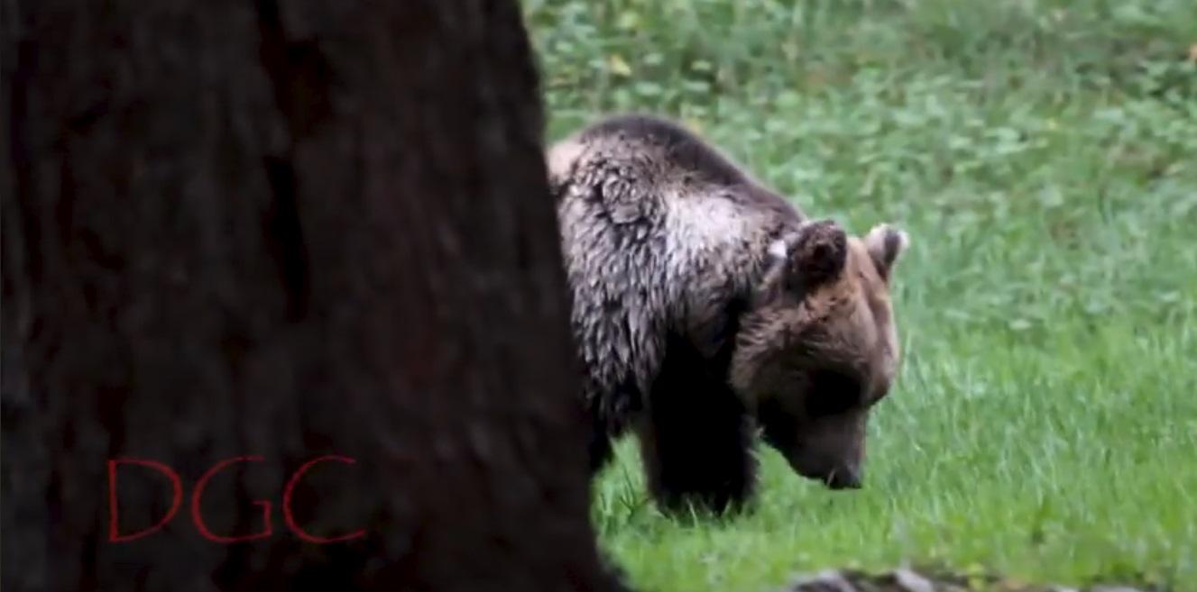 L'ordinanza del Consiglio di Stato vieta l'attività venatoria in una delle aree fondamentali per la tutela dell'orso bruno marsicano