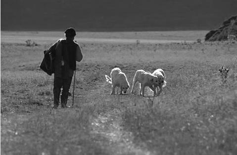 Il tempo dei pastori d'Abruzzo