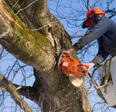 Comune di Avezzano, date esatte per la potatura degli alberi