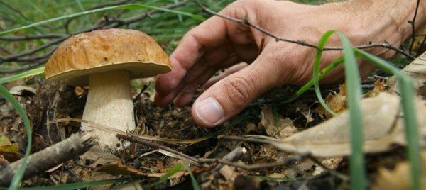 """Raccolta funghi, Imprudente: """"Semplificazione titolo abilitativo"""""""