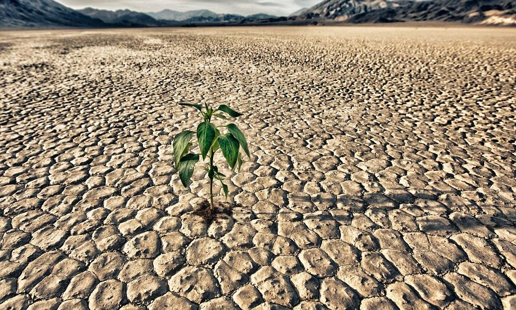 """La siccità avanza, Coldiretti Abruzzo: """"A rischio l'orto marsicano. Necessario riorganizzare Consorzi bonifica"""""""