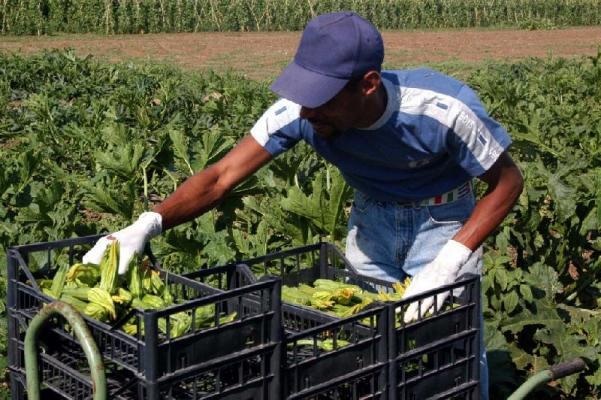 Avanzamento della spesa in agricoltura: l'Abruzzo chiamato a restituire milioni di euro a Bruxelles